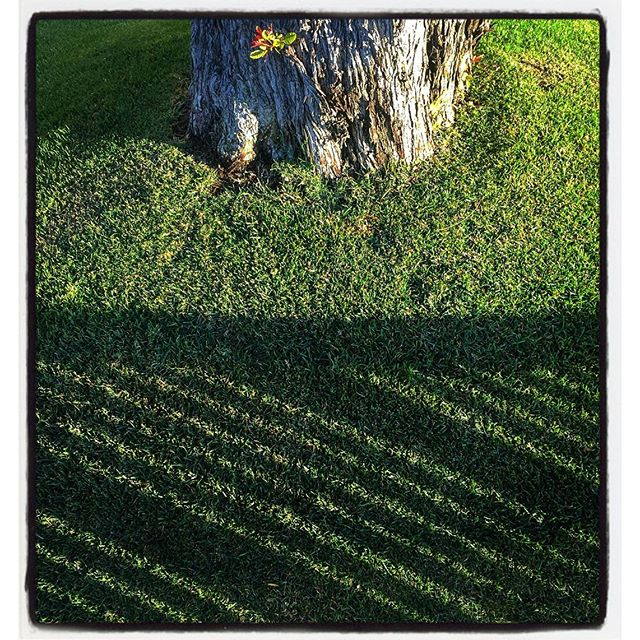 Diagonal Shadows on Grass & Sprout on Tree Trunk