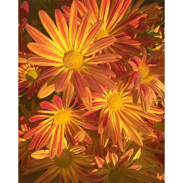 Good Morning Orange Flowers : Orange flowers singing good morning reality seo