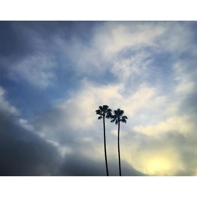 Palm Trees & Clouds at Sunrise