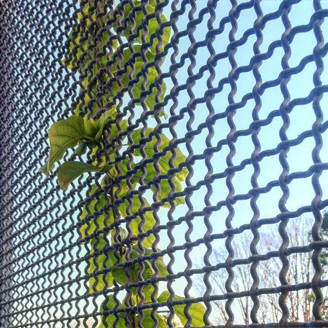 Vine Clumbing Wire Grid