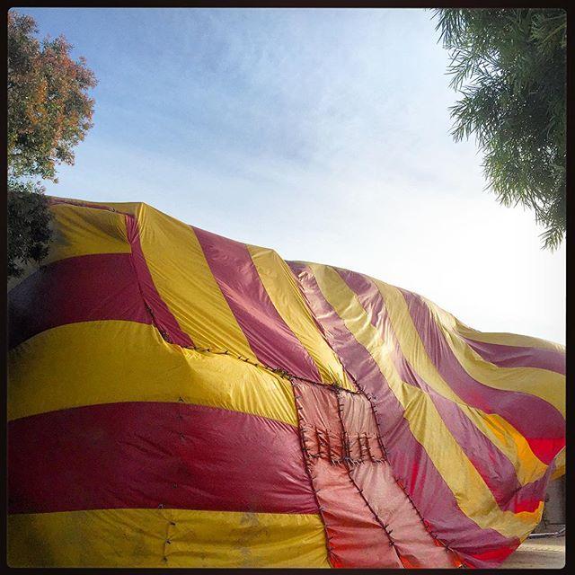 Wind Blown Termite Tenting & Wind Blown Termite Tenting - Reality SEO