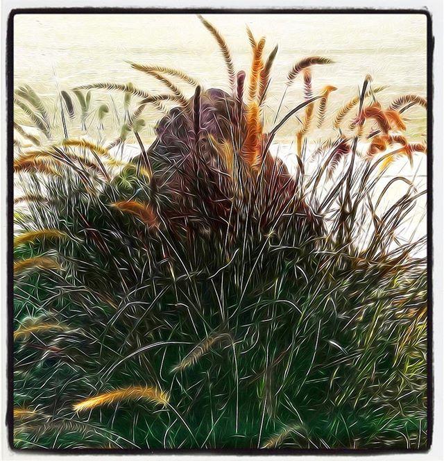 Rock & Grasses (edit)