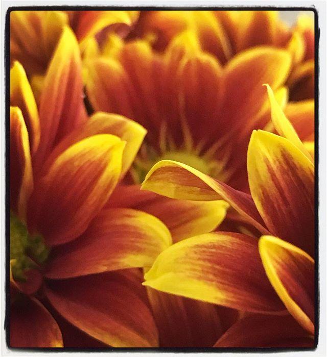Petals in Burnt Orange & Yellow