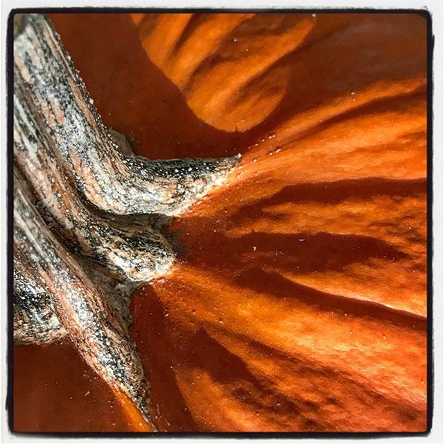 Pumpkin Top Texture